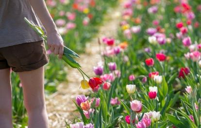 Fleurs à Couper en libre cueillette
