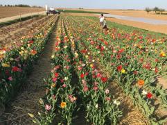 Libre cueillette de fleurs